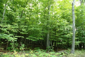 Land vacant wooded lot